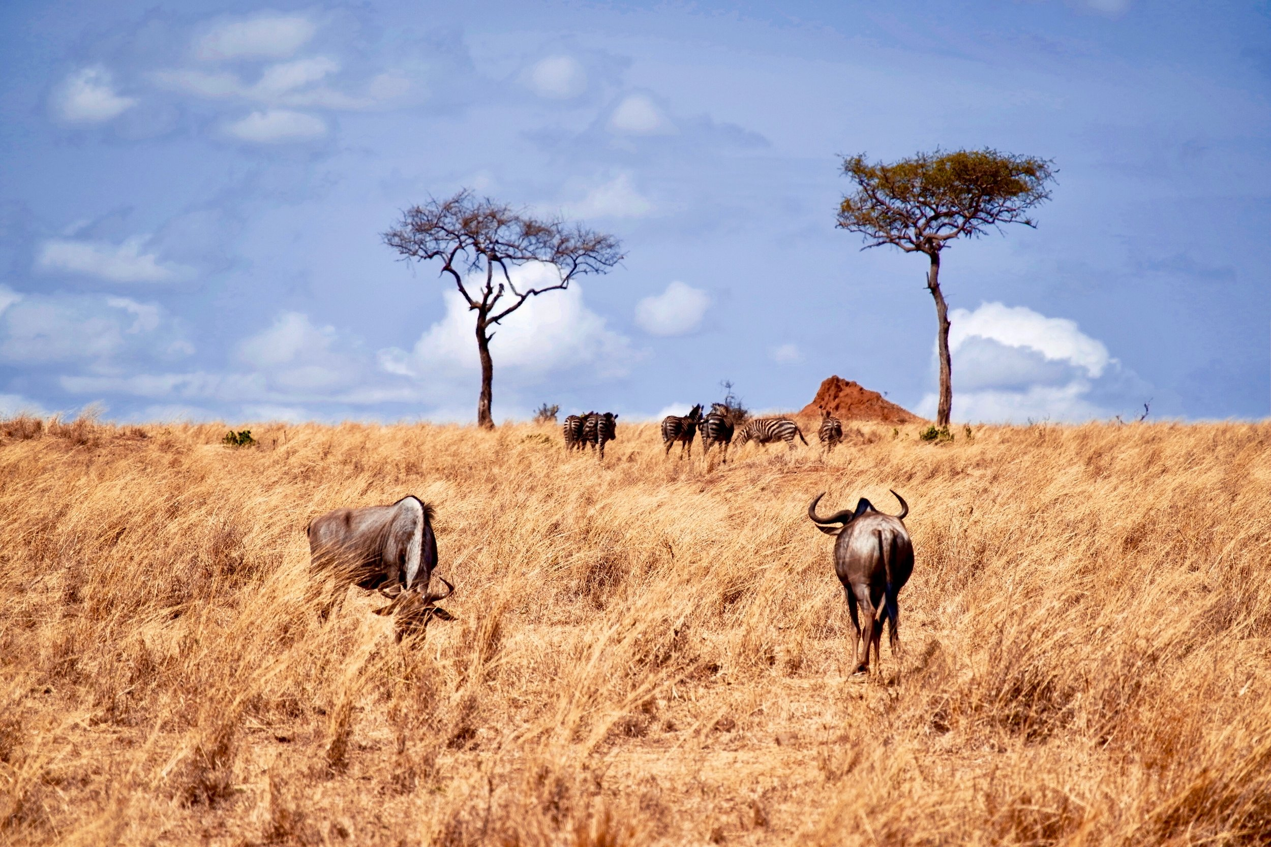 Ready to see Tanzania? - starting from $4,750 for 14 days