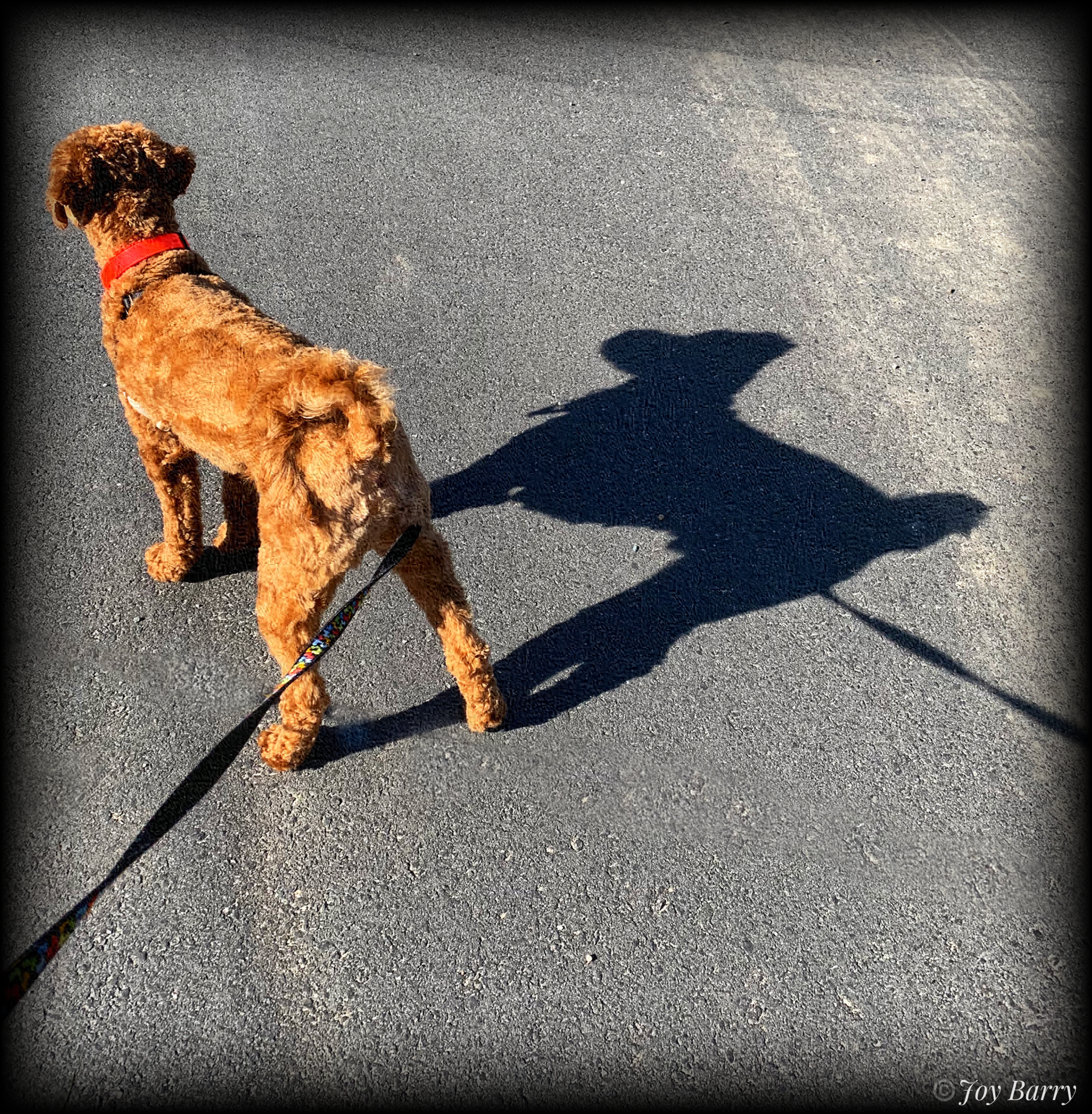 March 31, 2019 - KerrBee and his shadow…going for a walk!