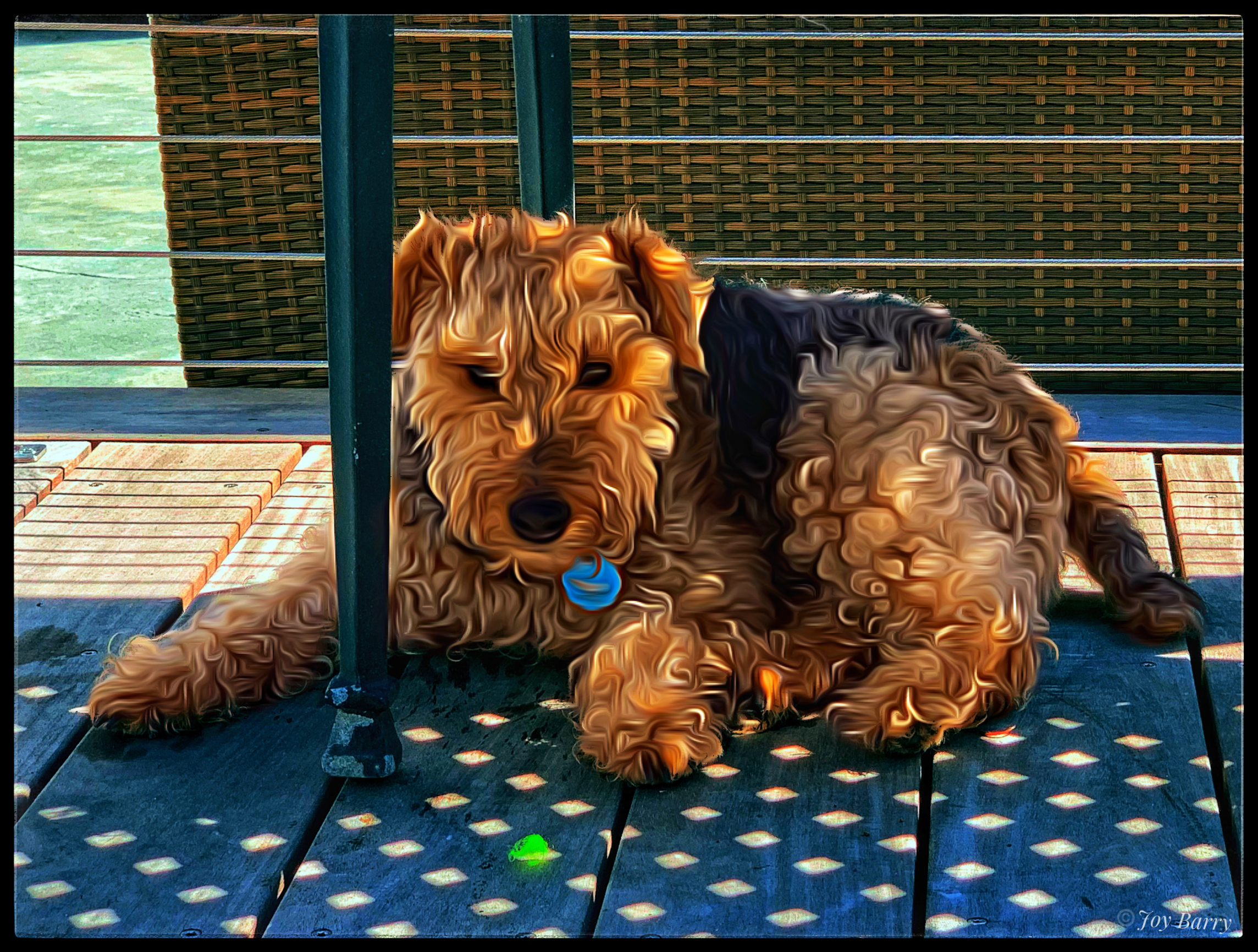 """April 4, 2019 - Penny Weatherbee hanging out on the deck after a rousing game of """"chuck-it""""."""