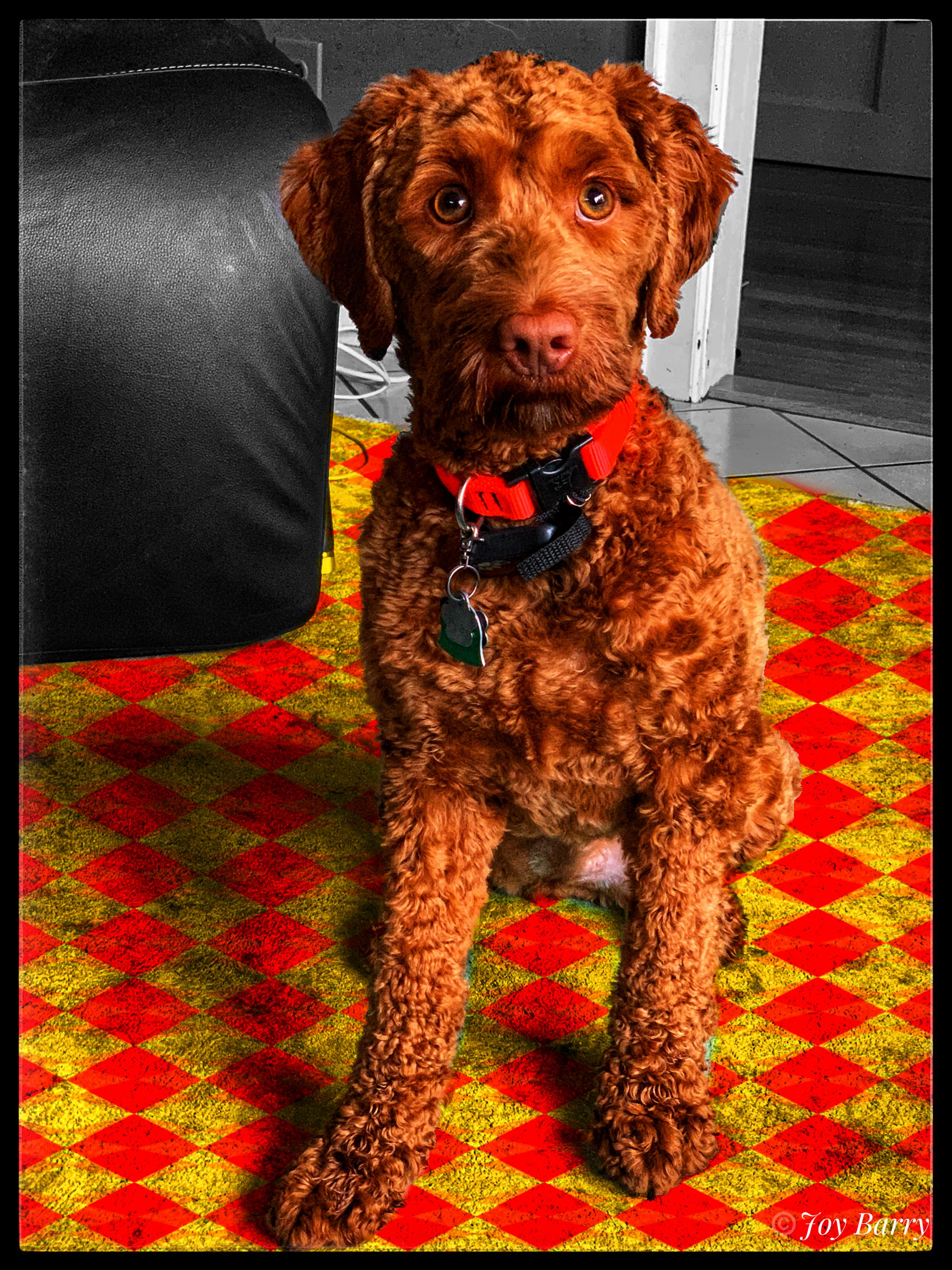 April 3, 2019 - My dapper little dude, KerrBee.