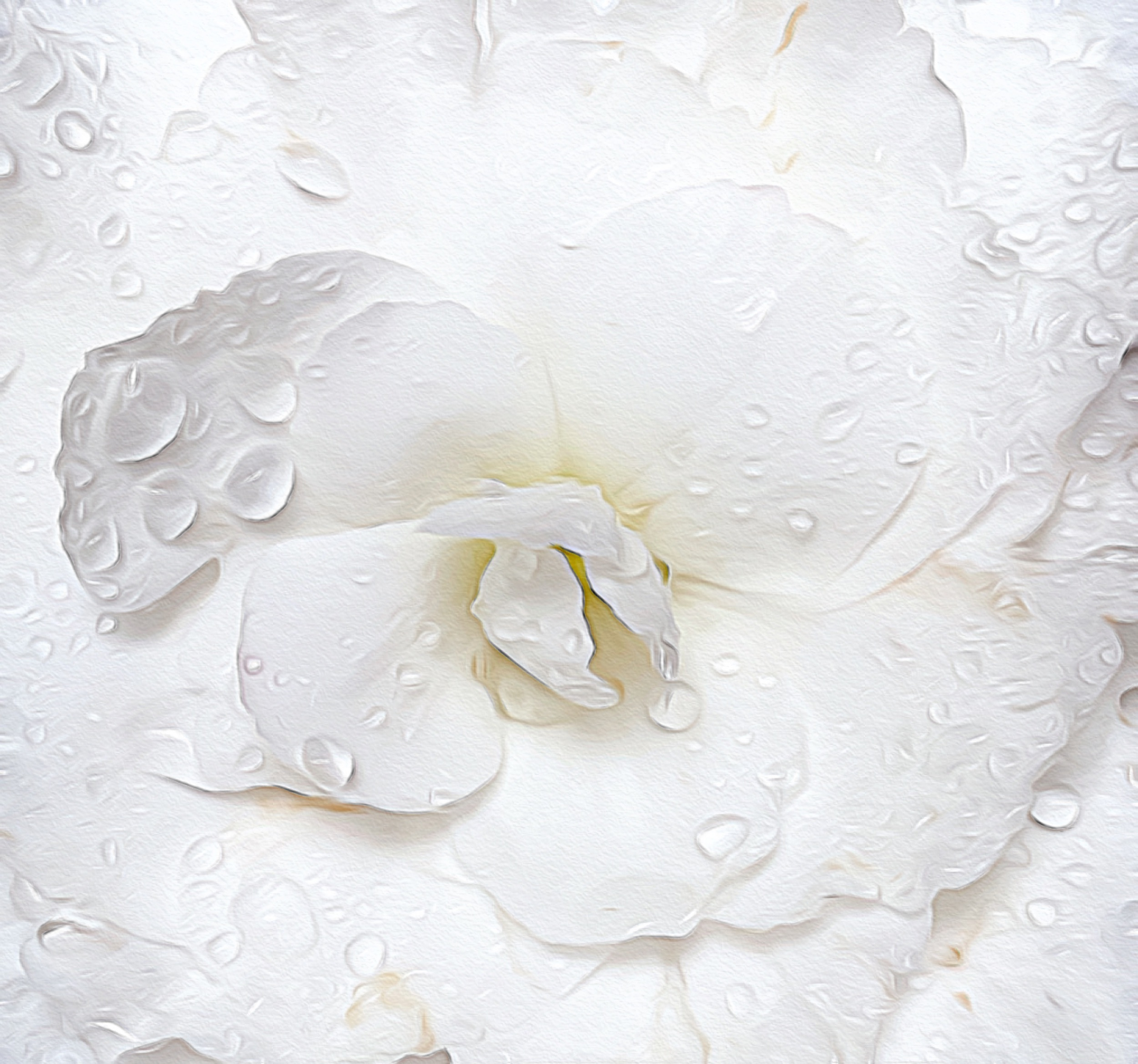 """July 22, 2019 - """"Whisper over me, Why don't you, begonia…"""" from the poem """"Praise to the End"""" by Theodore Roethke."""