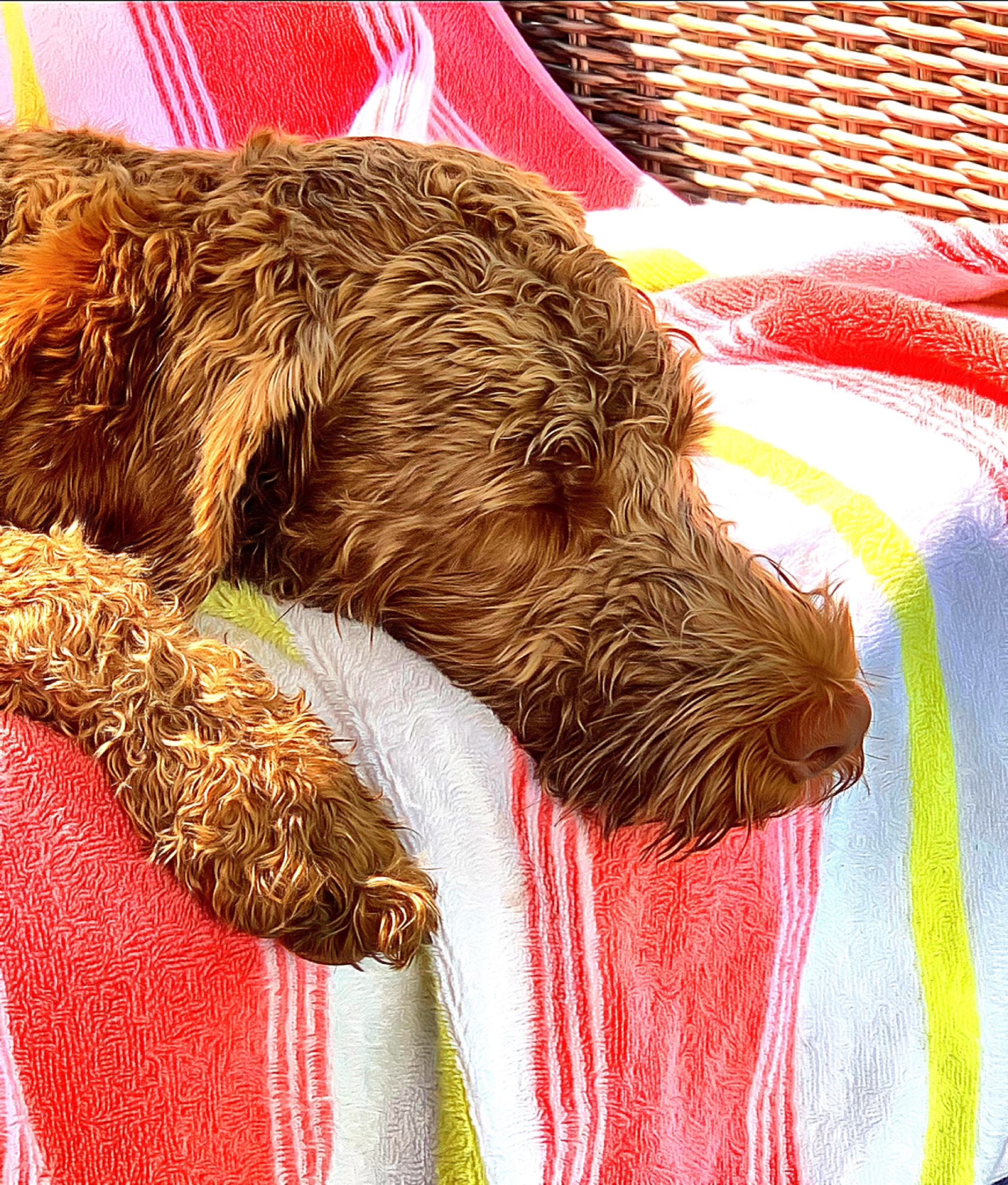 August 7, 2019 - Little KerrBee takes a well-deserved rest in the sun after a very active play & swim session!