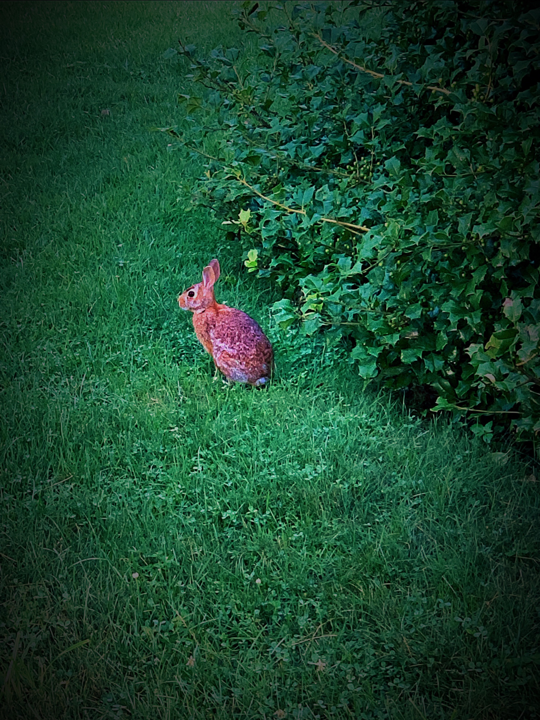 August 15, 2019 - A visitor to my yard (from my walk this morning).