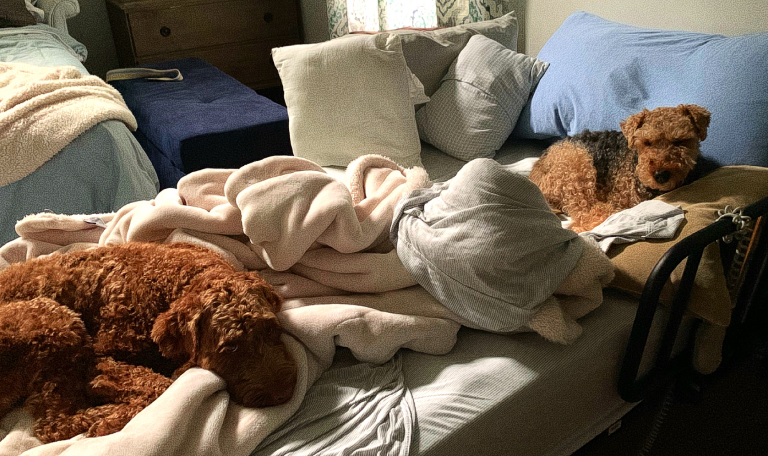 August 26, 2019 - I left my warm, comfy nest of a bed for just a minute this morning…and this is what I returned to…