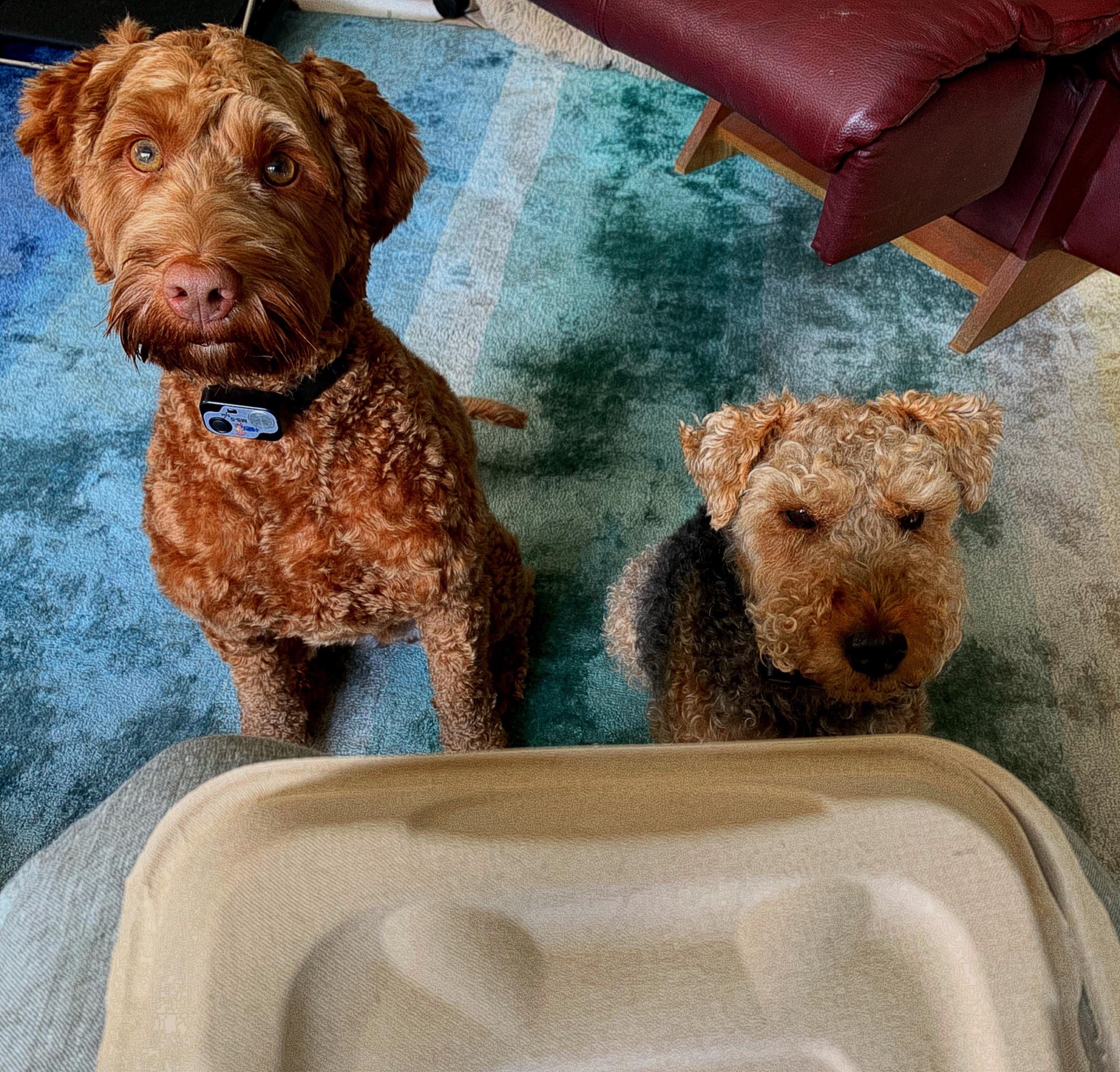 "August 31, 2019 - ""Whatcha bring us, mom?!"""