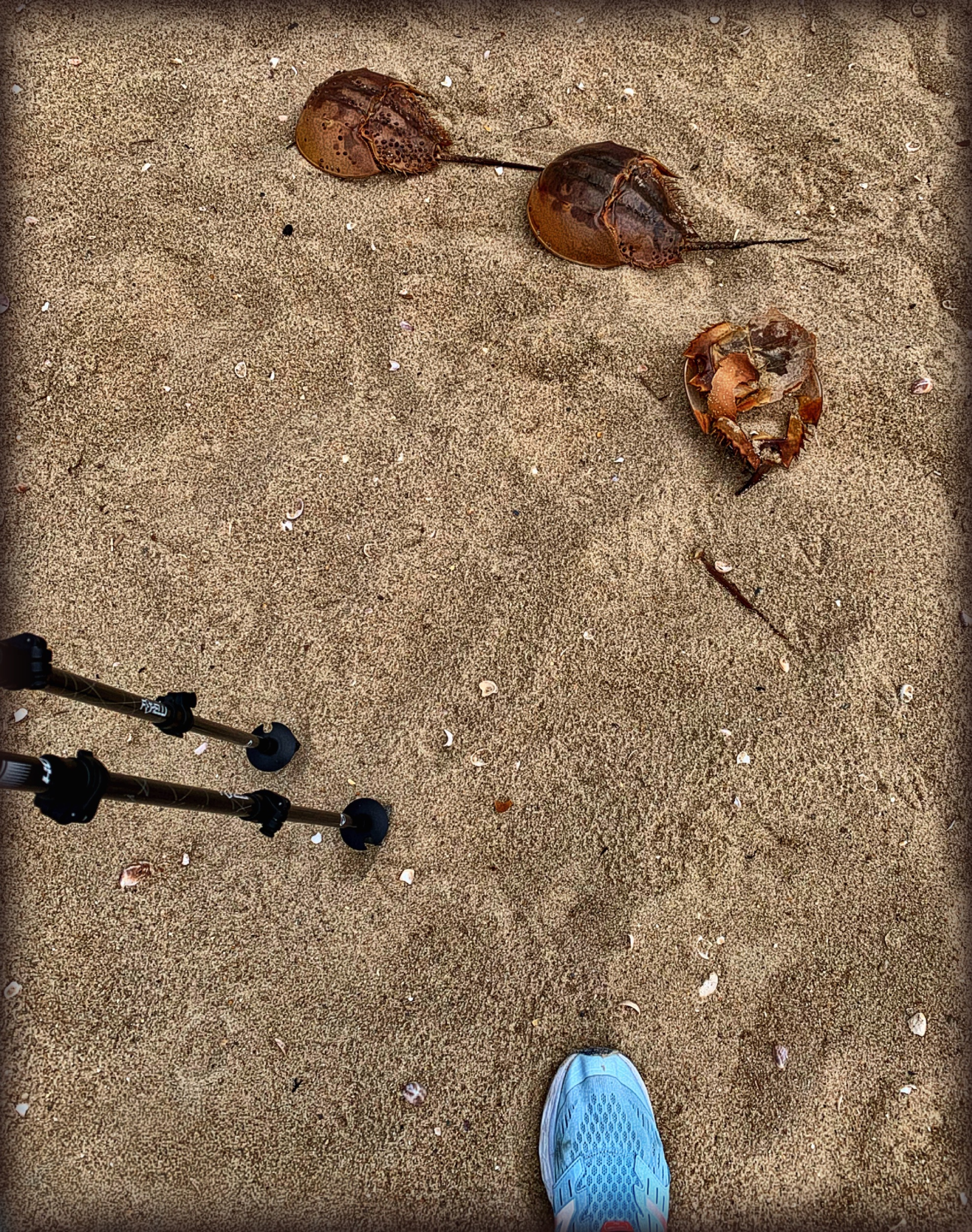 September 4, 2019 - Enjoyed my 1st beach walk this morning (used walking poles rather than cane)!