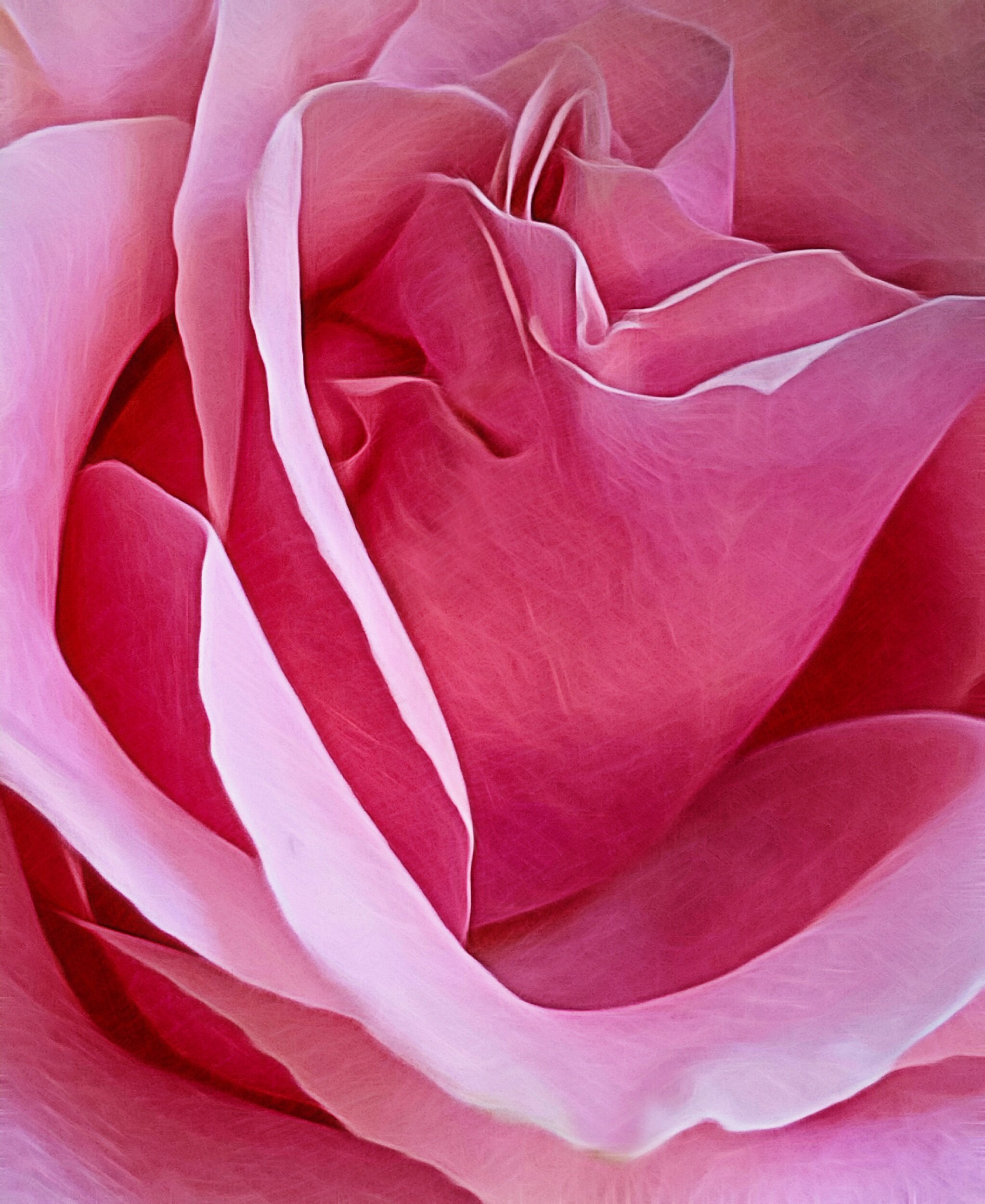 September 21, 2019 - A beautiful rose in honor of today — the International Day of Peace.