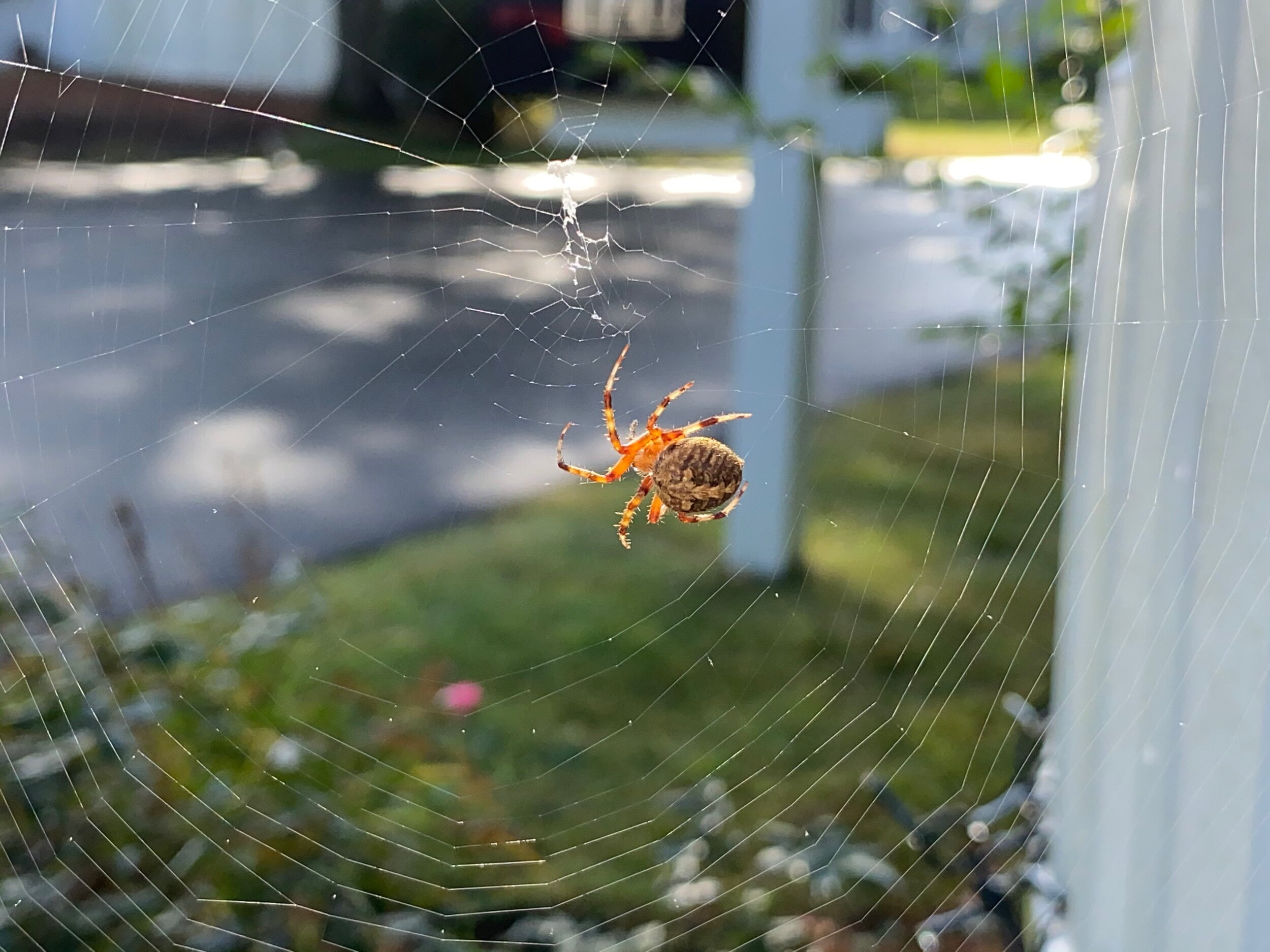 September 26, 2019 - Web repairs after a night of heavy rain (unedited).