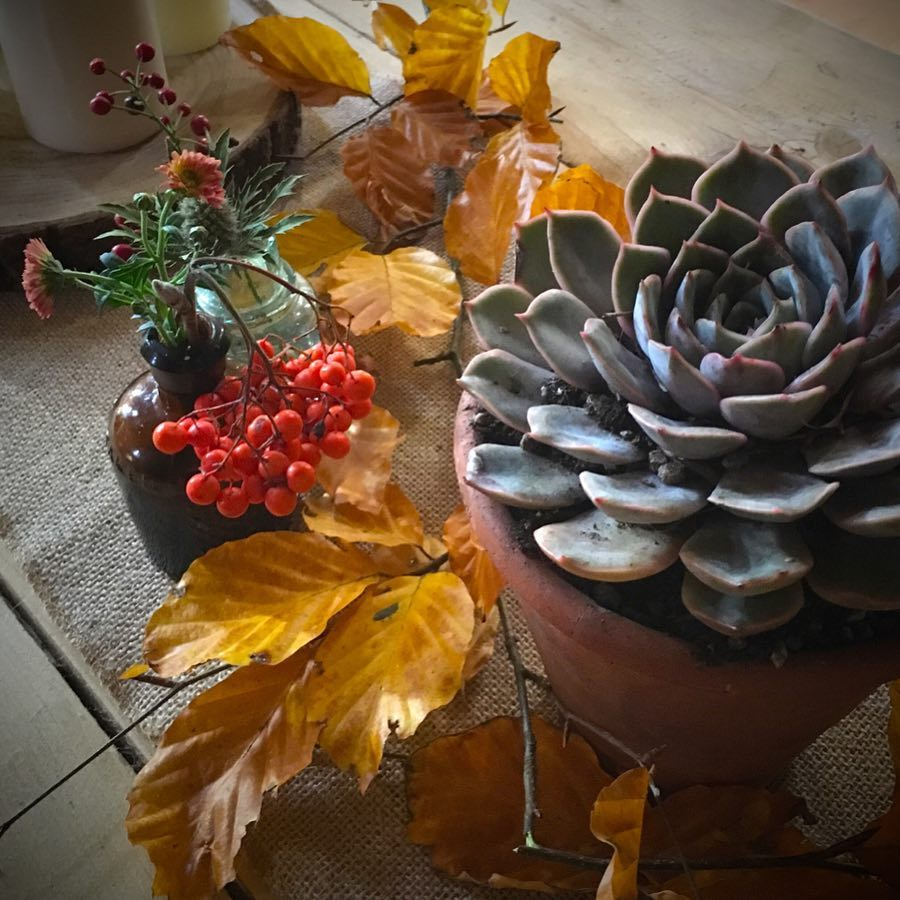Succulent table collection.jpg