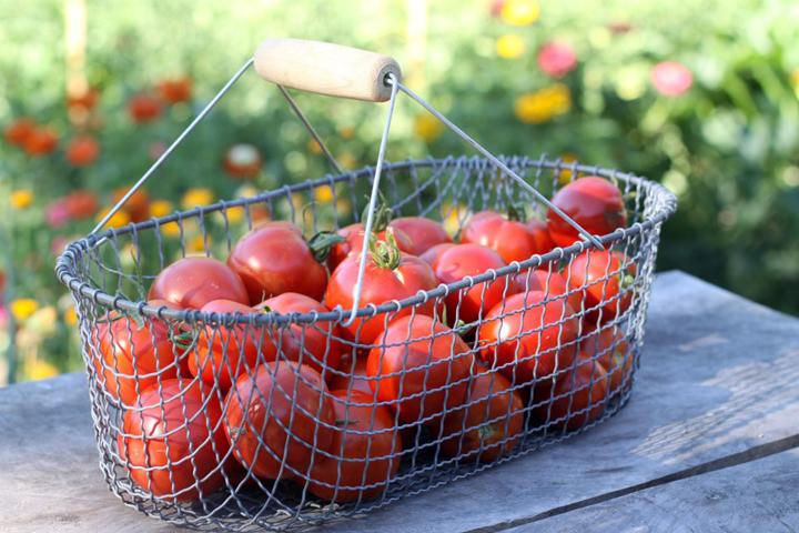 tomato-basket.jpg