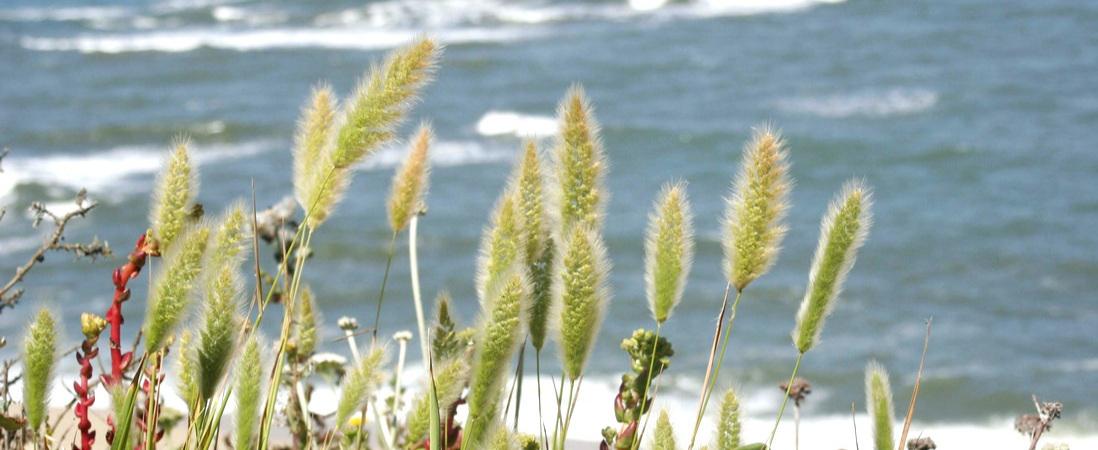 Coastline-04-orig.jpg