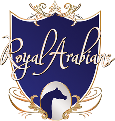 royal arabians.png