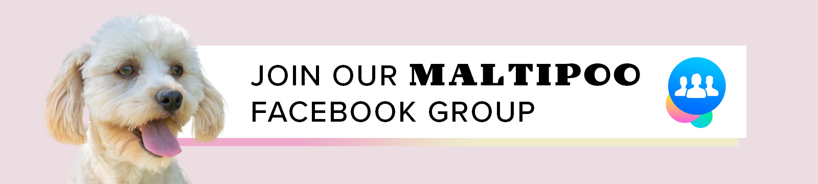 Maltipoo Facebook Group