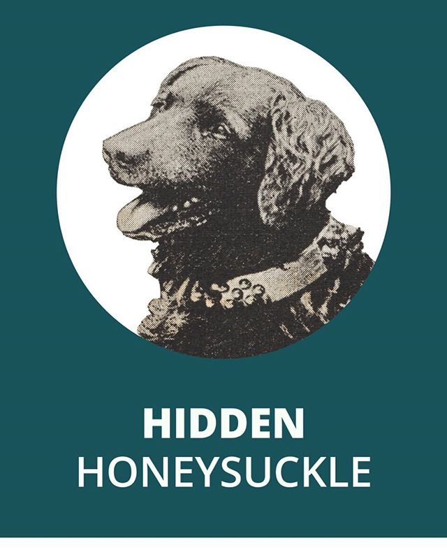 We have an App! Go to the Google play store to download for free! IOS to come. Explore the hidden side of honeysuckle #carlothedog #findcarlo #honeysuckleplacemaking #hiddenhoneysuckle