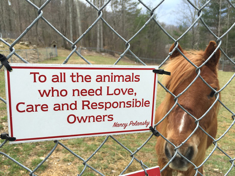 sign with horse.jpg