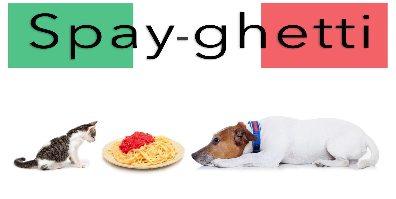 spayghetti3.jpg