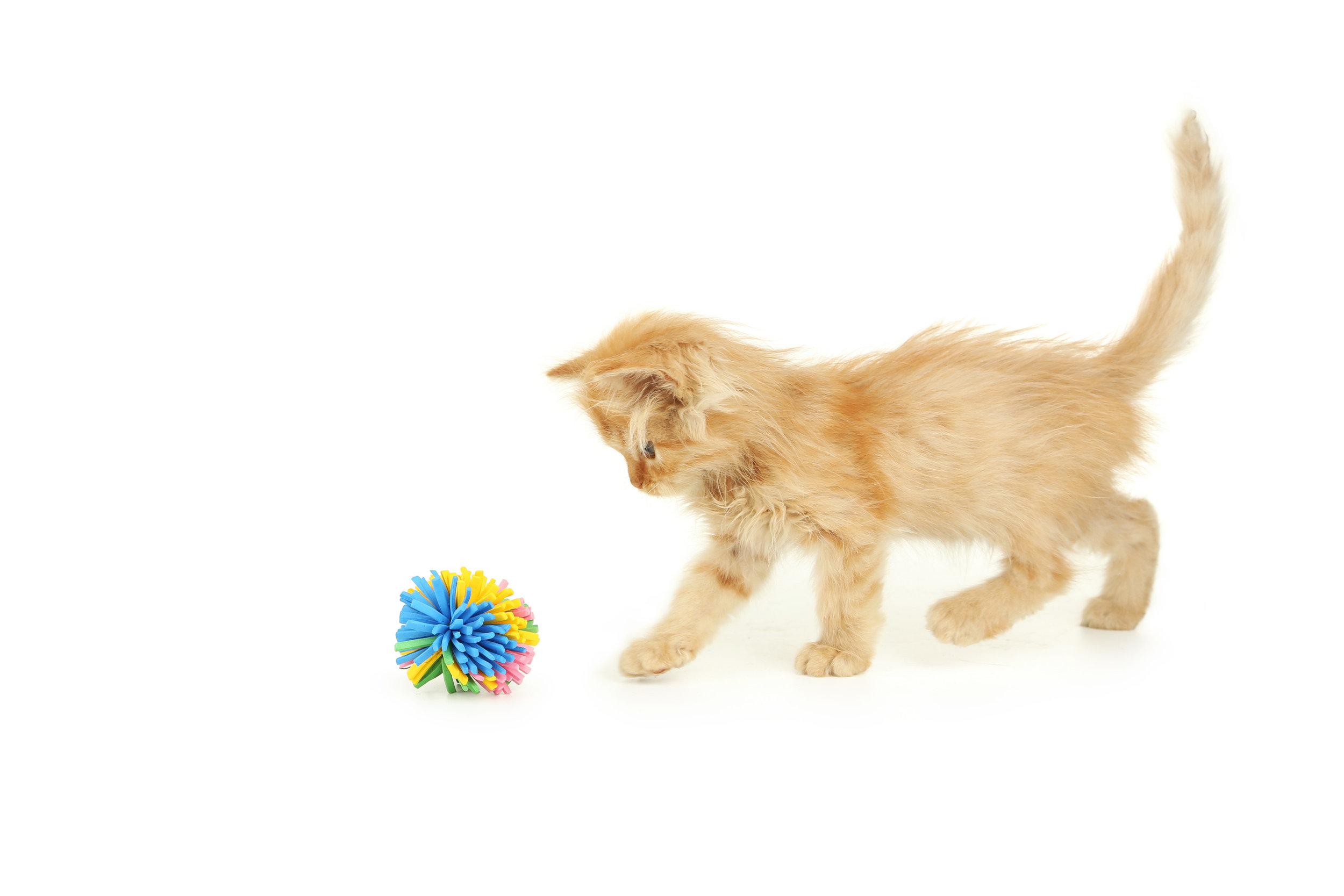 kitten with toy 2.jpg