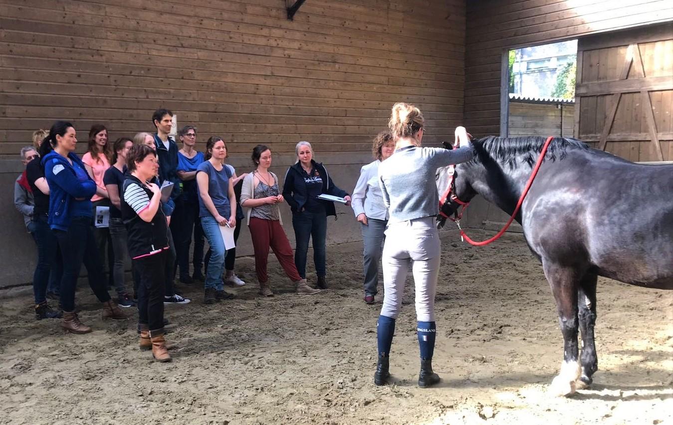 Hoe ziet de opleiding eruit? - Deeltijdopleiding op HBO werk- en denk niveau.Een vakopleiding voor Cranio-Sacraal Therapie voor paarden met speciale aandacht voor het opzetten van je eigen praktijk.Gerenommeerde vakdocent(en), er zijn altijd twee docenten aanwezig tijdens de praktijklessen wat zorgt voor veel persoonlijke aandacht en begeleiding.Op een mooie locatie op de Veluwe waar de praktijk en theorie lessen gegeven worden en waar heel veel verschillende oefenpaarden aanwezig zijn.