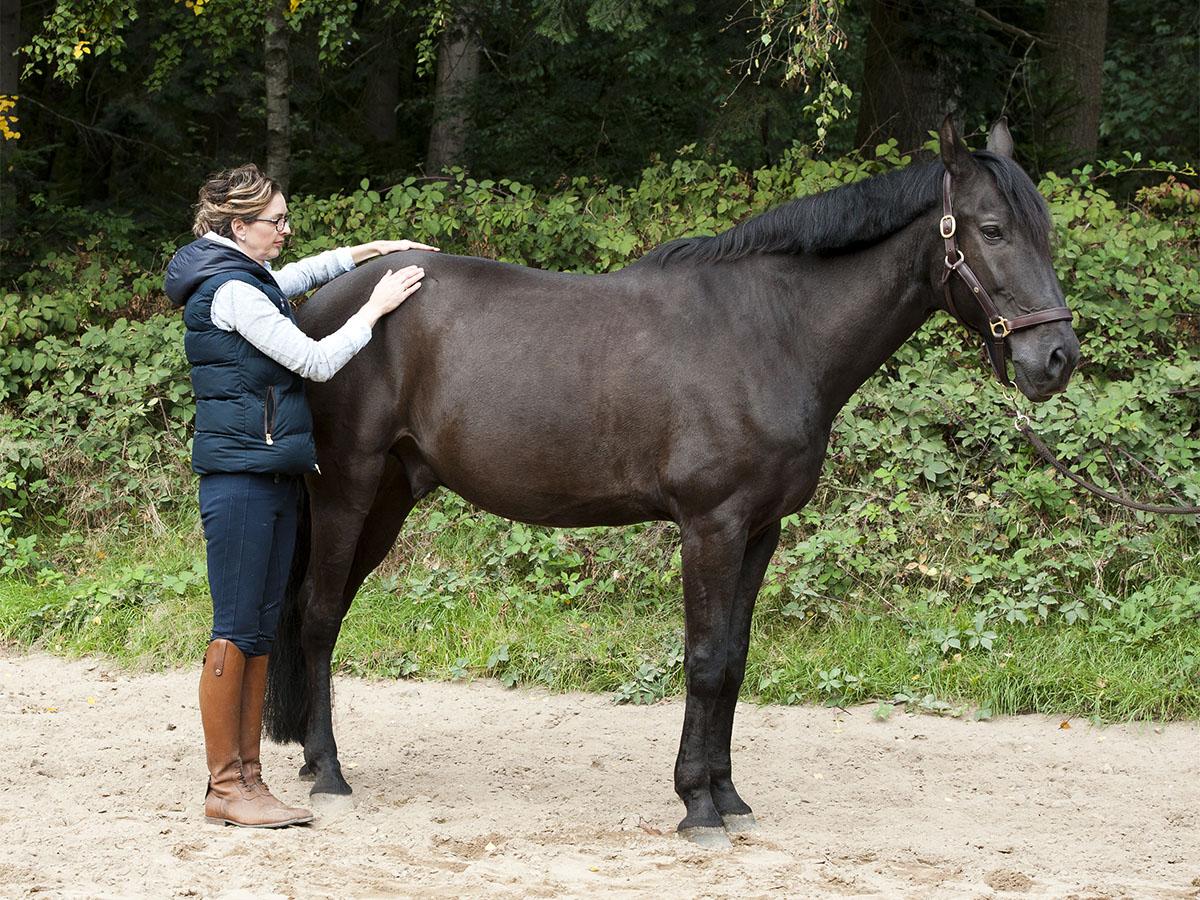 Cranio-Sacraal Therapie - CST is een ondersteuningsvorm om paarden te helpen om de oorzaak van hun klachten te achterhalen en bij de oorsprong te behandelen.In de Cranio-Sacraal Therapie gaan we er vanuit dat het paard een totaliteit is met diverse fysieke, emotionele en mentale lagen.Pas als al deze lagen zowel op bewust als onbewust niveau 'geheeld' en verbonden worden, zal het paard in alle opzichten optimaal in zijn vel gaan zitten en van daaruit maximaal kunnen gaan presteren.