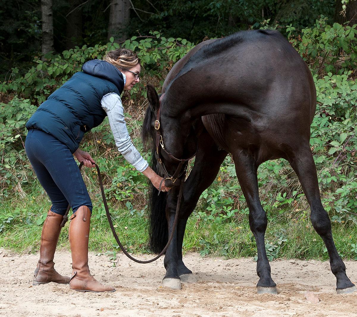"""Equine Cranio Touch - """"Ik heb in de loop der jaren mijn eigen manier van behandelen ontwikkeld; de benadering van het paard, de opbouw van de behandeling, inzet van passende middelen/voeding en de nazorg, zijn met grote zorg en passie."""""""