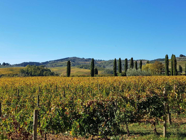 Auto-Elite-Day-Tour-Wine-Tasting-Chianti2.jpg