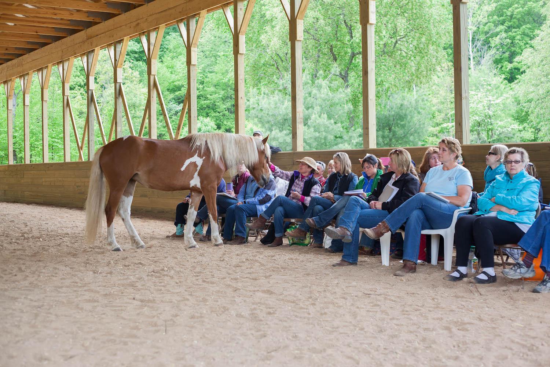 Natural Horsemanship Classes at Peace Ranch in Traverse City, Michigan