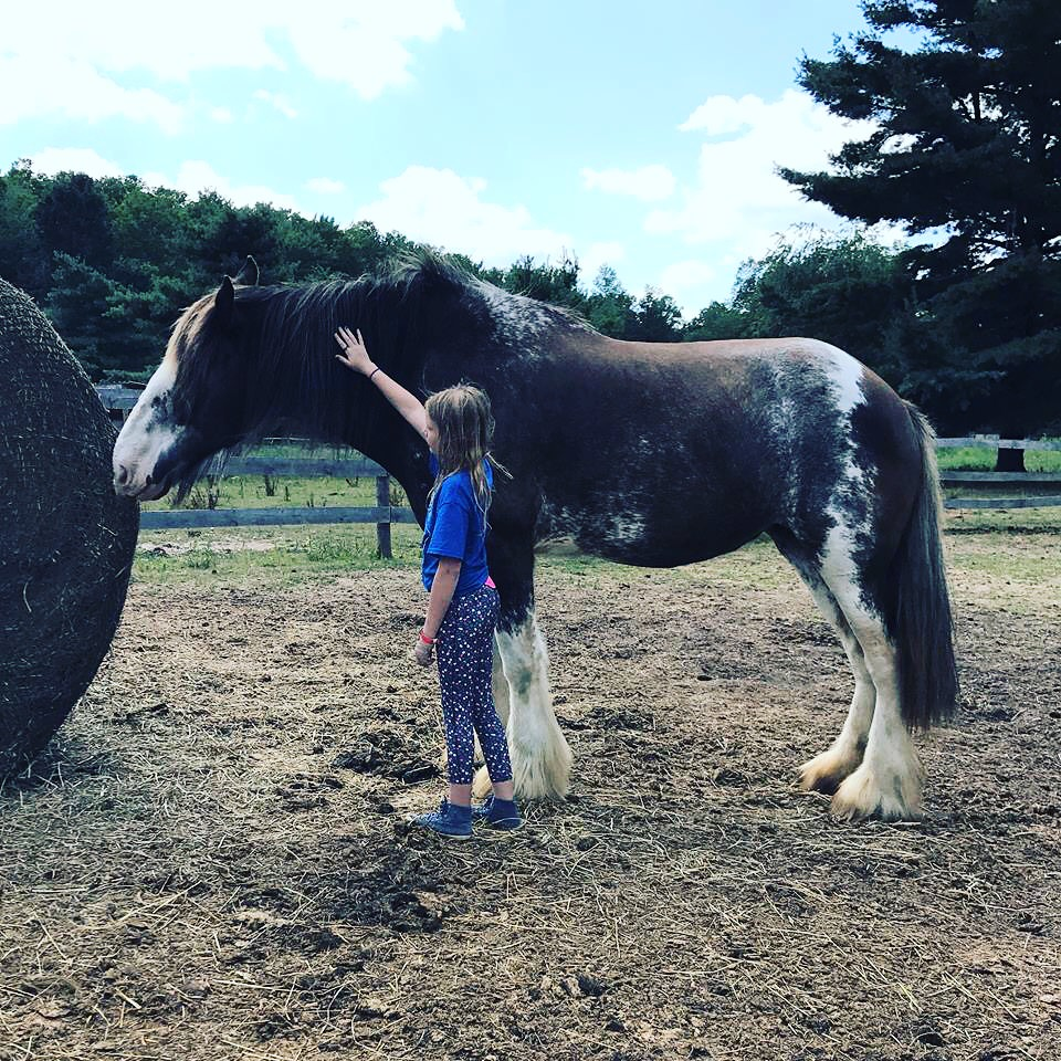 Therapeutic Events at Peace Ranch in Northern Michigan