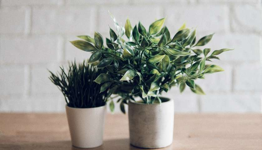 Reasons to be loving houseplants this January - The Hills Countryside Blog