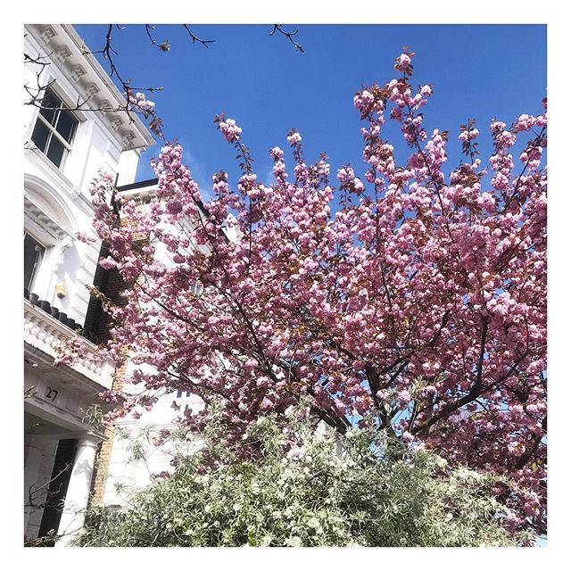 Still can't get over how pretty all the Notting Hill cherry blossoms are 🌷🌸 We're crazy busy this week after the success of the Scottish Beauty Show last weekend. Very excited to have lots of new stockists! So taking a few moments this morning to enjoy a little sun felt amazing 🌻 • • • • • ⠀⠀ #londonlife #positiveenergy #positiveliving #healthymindset #mindbodygram #mindbodygreen #wellnessblog #iamwellandgood #positivelife #highvibelife #positivevibes #selfloveclub #wellbeingworrior #londoncalling #london #lovelondon #selfgrowth #skinessentials #skincarejunkie