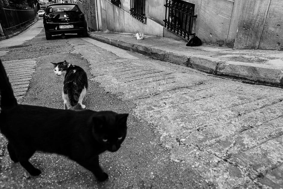 photo fine art noir et blanc projet mémoire de rêvelise rohart - chats sur la routhe à athénes.jpg.jpg