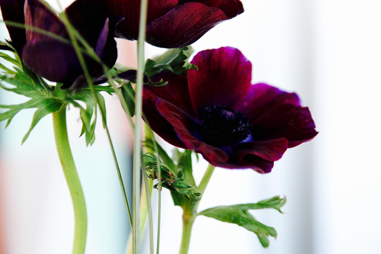 détail de fleurs pourpres - photo couleur fineart projet photo choses à soi - série benoit renaud - de rêvelise rohart.jpg