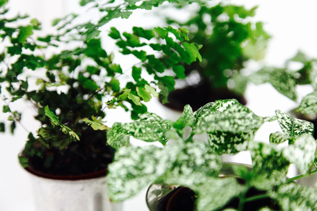 détail des petites plantes vertes dans la salle de bain - photo couleur fineart projet photo choses à soi - série benoit renaud - de rêvelise rohart.jpg