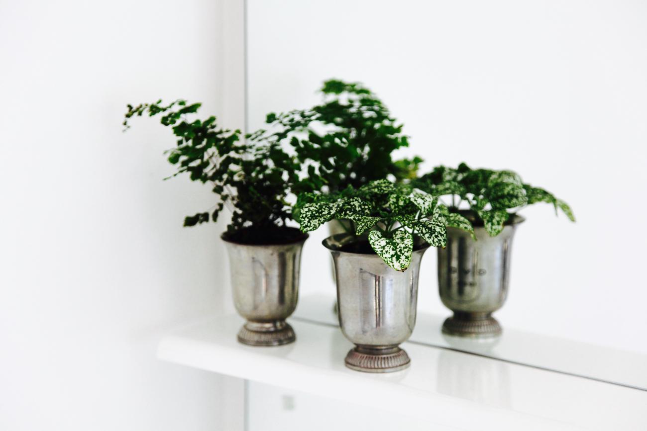 petites plantes vertes dans la salle de bain - photo couleur fineart projet photo choses à soi - série benoit renaud - de rêvelise rohart.jpg