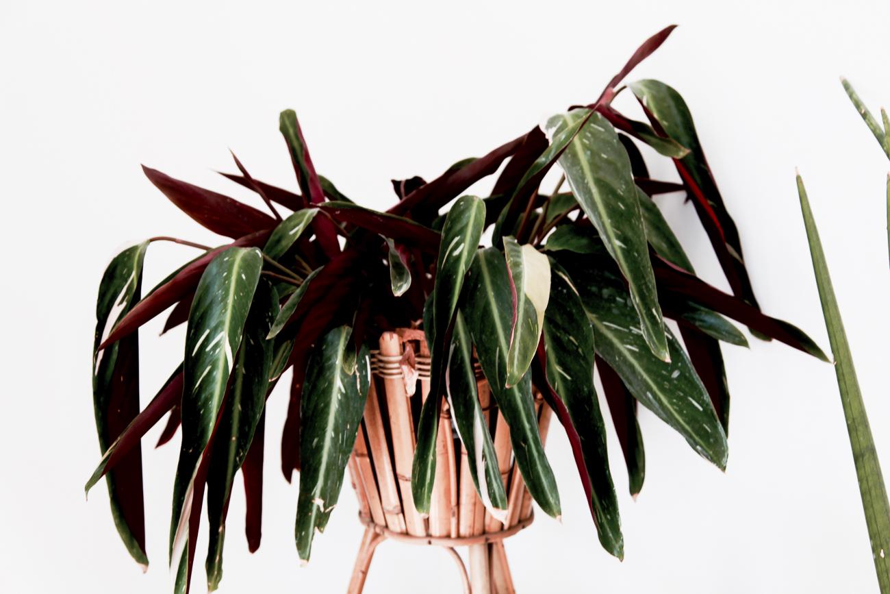plante verte et pourpre - photo couleur fineart projet photo choses à soi - série benoit renaud - de rêvelise rohart.jpg