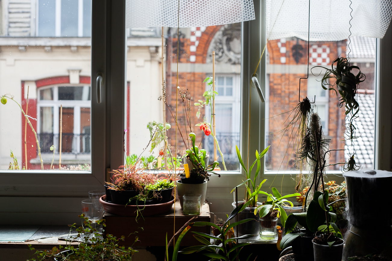 parc de plantes devant la fenêtre - photo couleur fineart projet photo choses à soi de rêvelise rohart - série ciel sonore.jpg