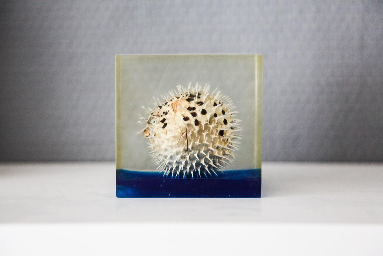 diodon emprisoné dans la résine  - photo couleur fineart projet photo choses à soi de rêvelise rohart - série lise rêvée.jpg
