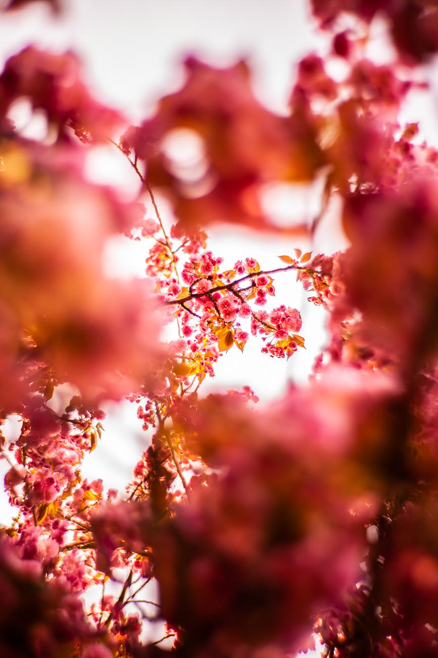 détail d'un cerisier pendant une séance portrait 2h à lille.jpg