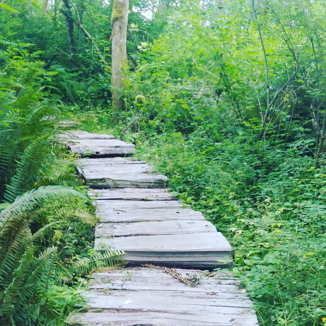 The Verdant Path…