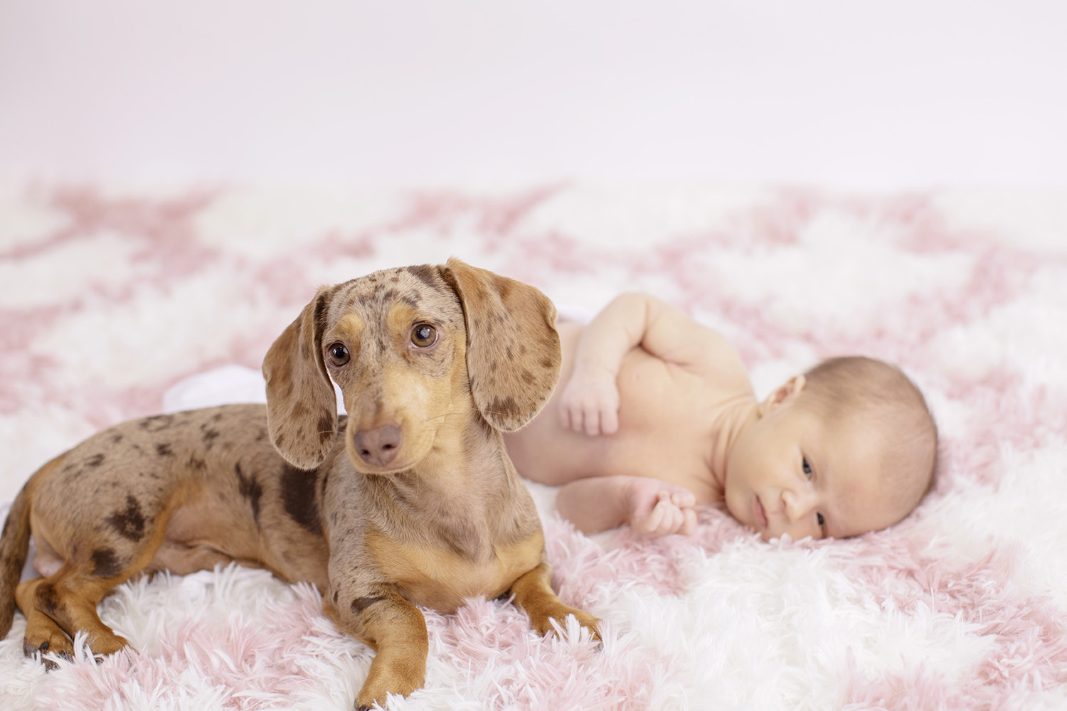 newborn-dog-photographer-mississippi.jpg