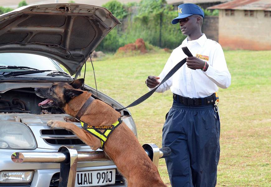 Detection-dogs.jpg
