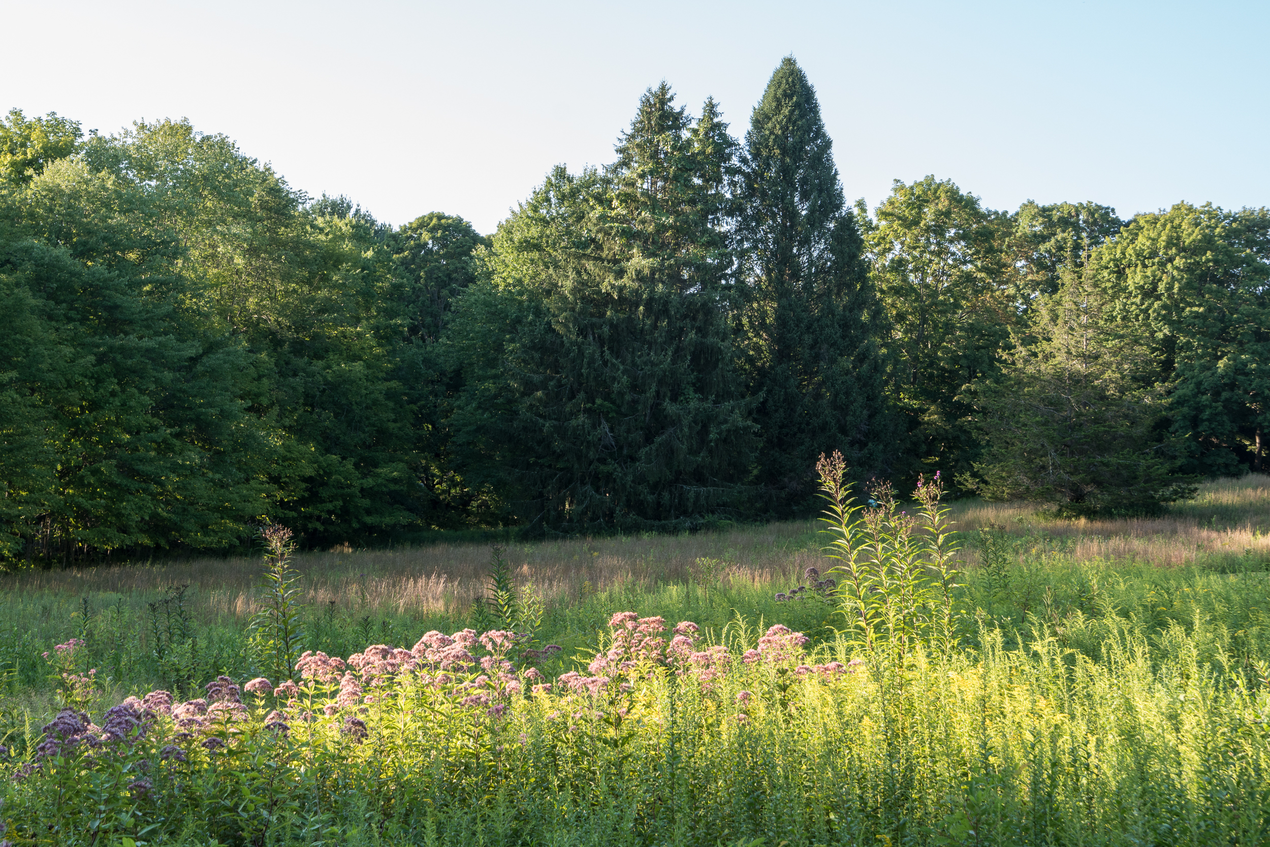 Land Trust Meadow Walk -39.jpg