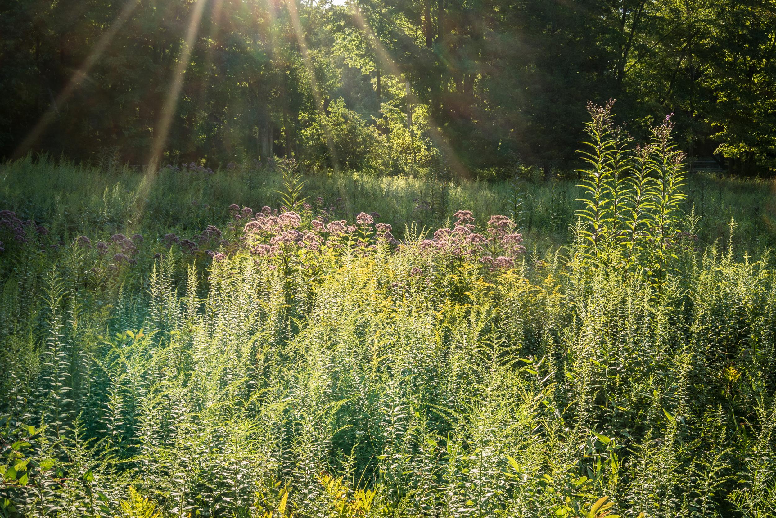 Land Trust Meadow Walk -44.jpg
