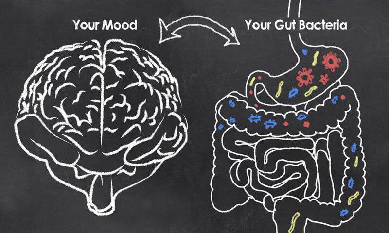 a31c9-gut-brain.jpg