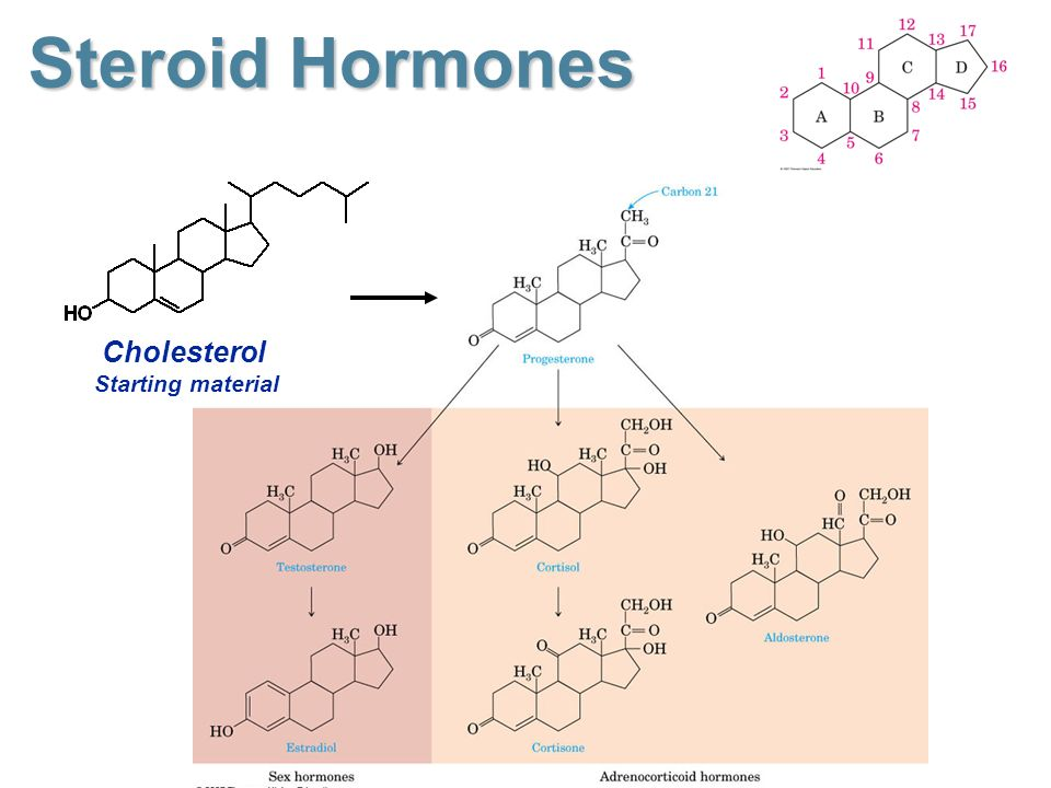 2a263-steroid2bhormones2bcholesterol2bstarting2bmaterial.jpg