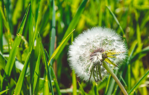 Feed and Weed Control - Fully licensed and insured with trained professional technicians.Our holistic approach for a healthy lawn creates the best offence against weeds. Our custom programs will get you smiling with a thriving lawn.Starting at $70.00