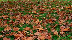 Spring + Fall Leaf Cleanup - Too many leaves? We have the equipment. Let our team efficiently clean up your leaves or needles.