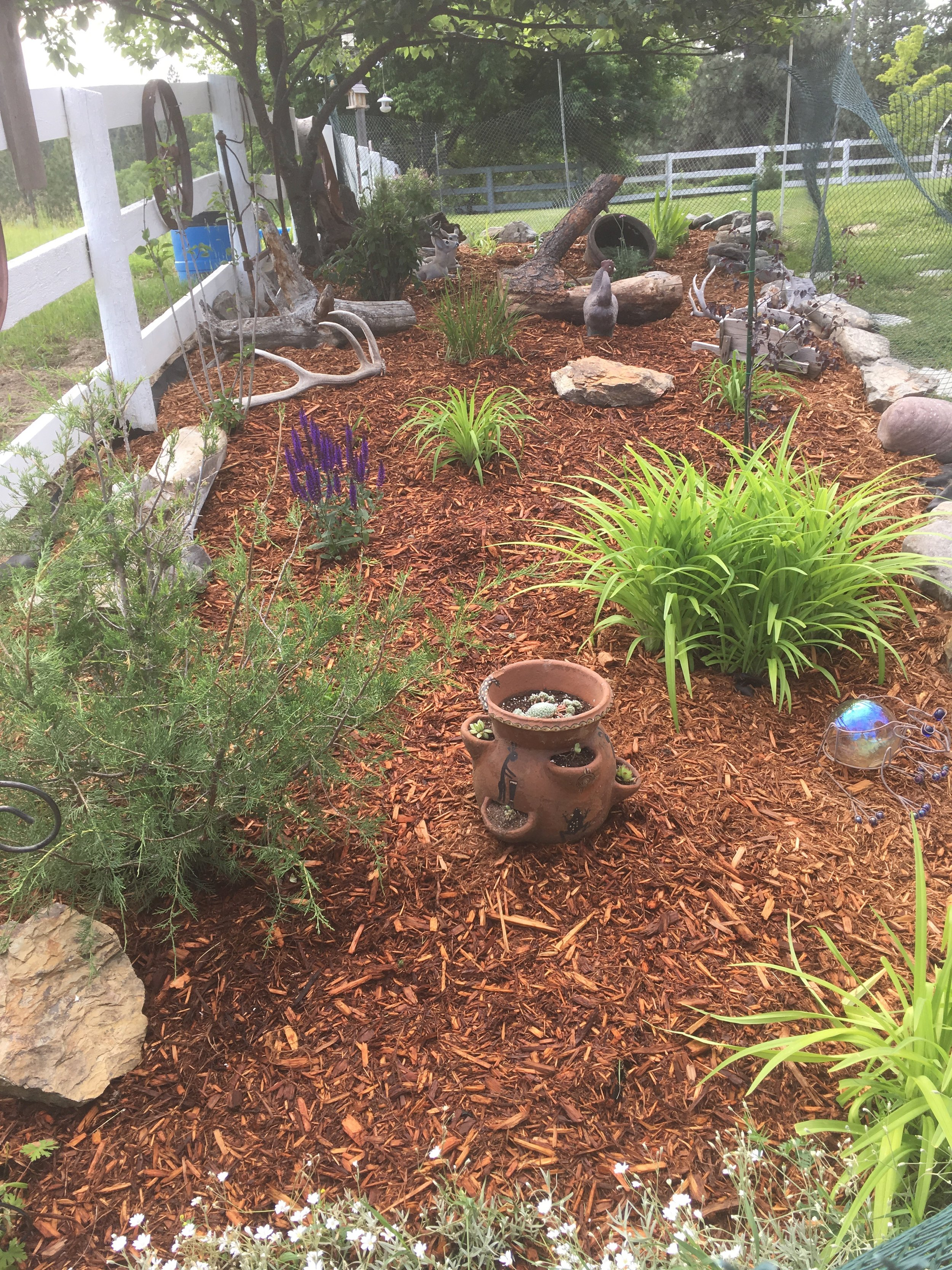 Need Garden Advice? - Don't know where to begin a project? Wouldn't it be handy to just to ask all your questions to one person? Book a consultation to get you started on the right foot and give you the answers you need. This service is often used by people with new yards who want to accomplish their dreams in the best order. For only $75.00 for the first hour, a yard consultation will get you growing in the right direction without learning the hard way.