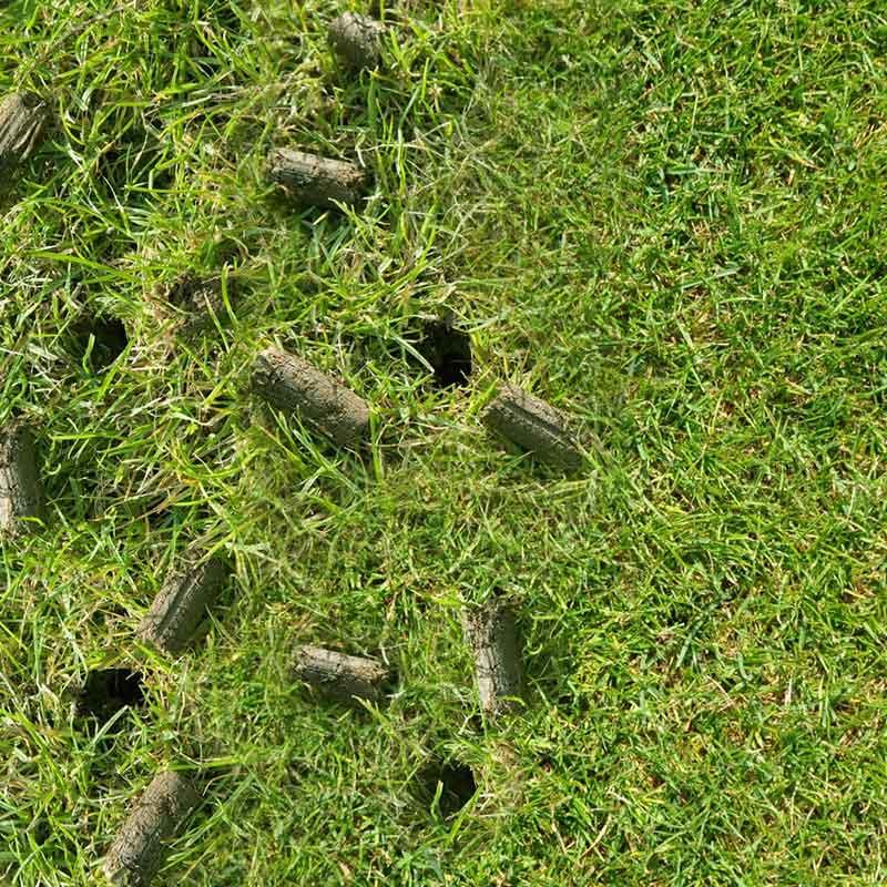 aerating-lawn-care-feature-kijenga.jpg