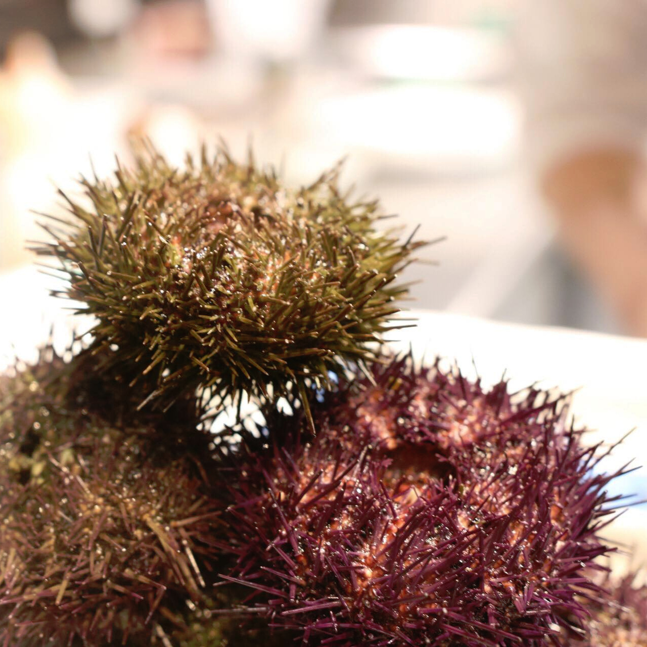 inf+sea+urchin+stack+2019.jpg