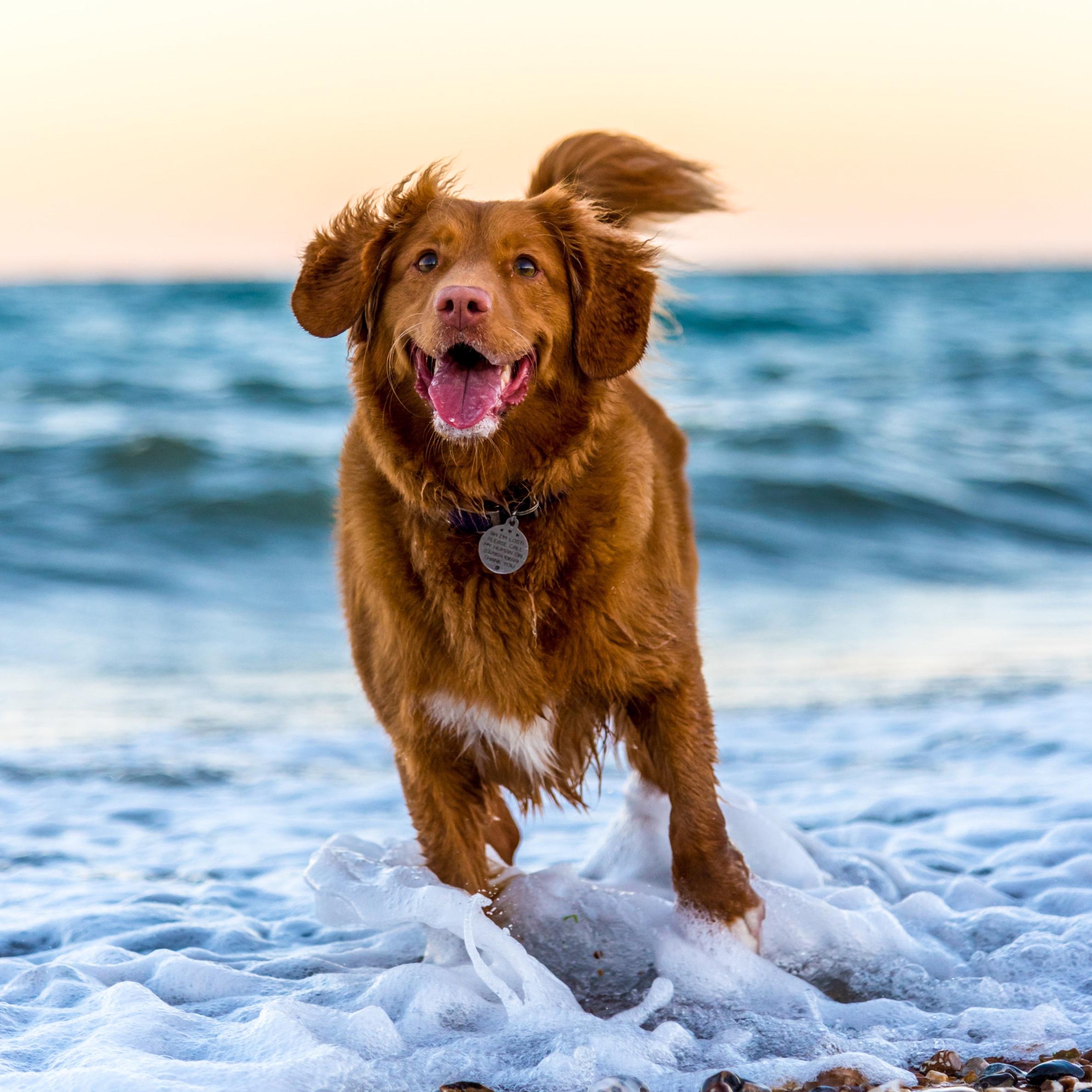 Dog Friendly -